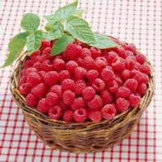 哈尔滨红树莓