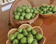大连软枣猕猴桃